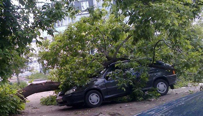 дерево упало на бентли